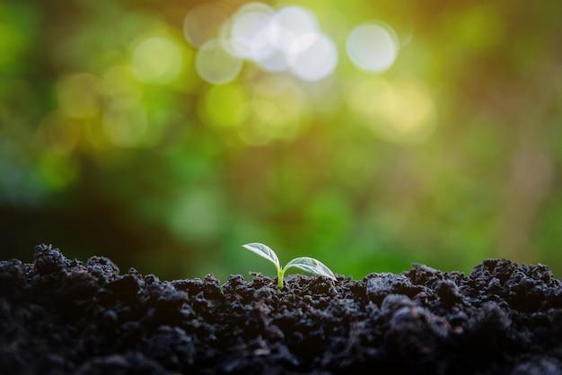 생태 환경 묘목의 성장