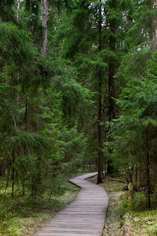 Ecological footpath in a national park through old coniferous spruce forest, natural trail through protected environment