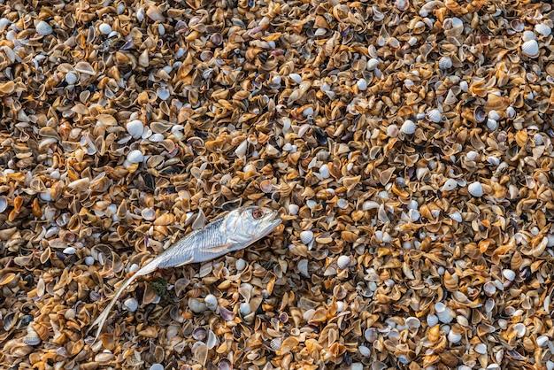 生態学的問題、海での魚の死