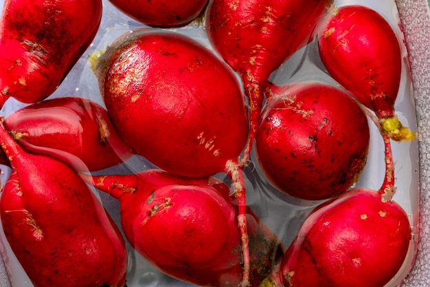 Ecological radishes (red radishes - rabanitos) of intense red color. wash in a container of water.