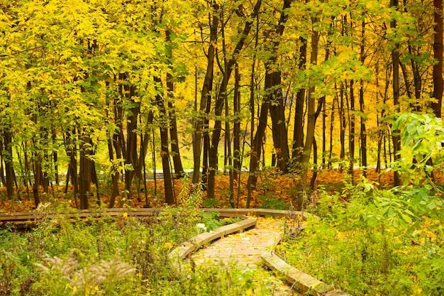 생태 트레일, 연단, 가을 공원에서 노란 잎이있는 나무 바닥