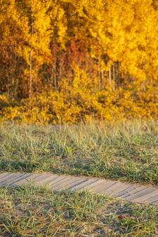 가을철에 화창한 날에 생태학적 나무 판자는 배경에 있는 가을 숲의 노란 나무들