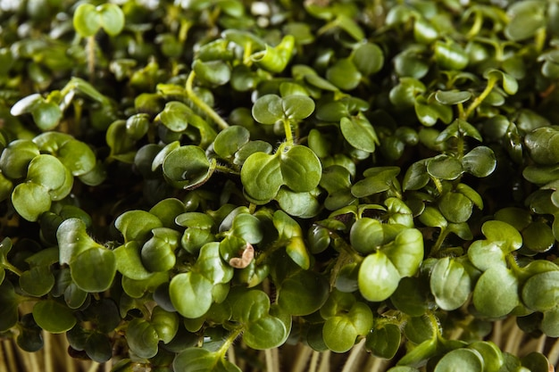 生態学的にきれいな食品。白のマイクログリーン(近い)