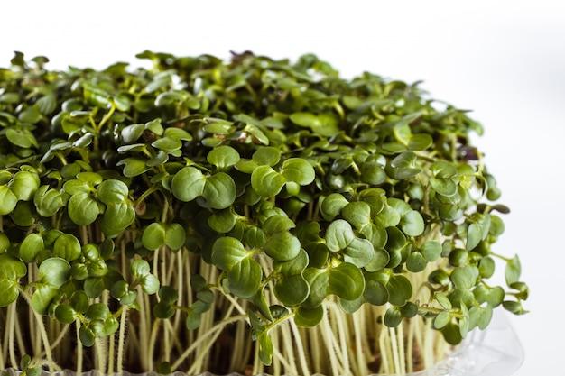 Экологически чистый пищевой микрозелень