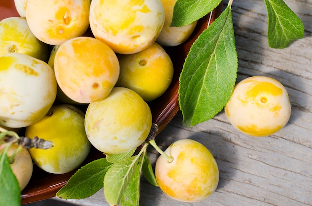 Ecologically grown yellow plums in a bowl. close up of a pile of ripe sweet plums.