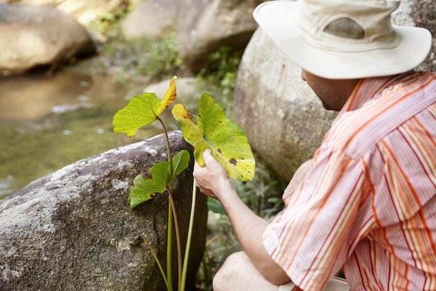 生態学および環境安全。川の岩の中に座っている葉の斑点病の緑の植物の葉を調べるパナマ帽子の科学者。生態学者が屋外で研究を行っています。
