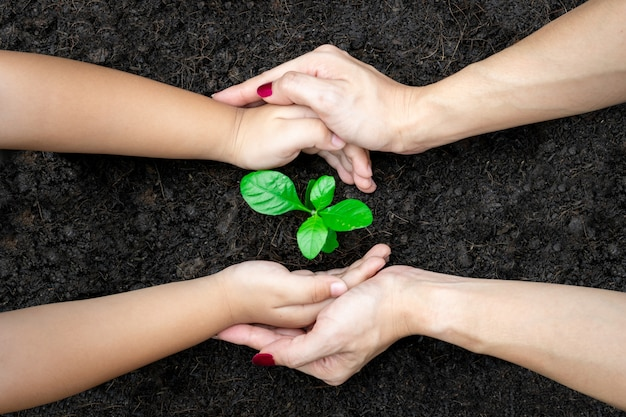 Ecology concept child and adult hands holding plant a tree sapling