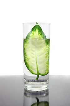 Ecology -green leaf in glass of water . conceptual.
