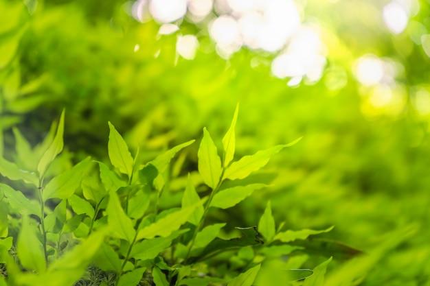 Ecology green nature wallpaper.