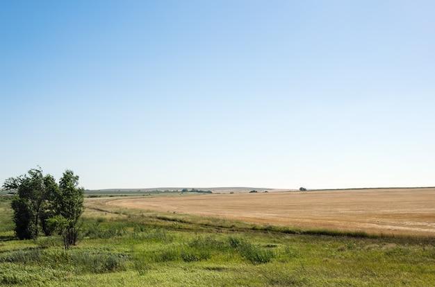 수확 된 밀밭, 농촌 풍경의 가장자리