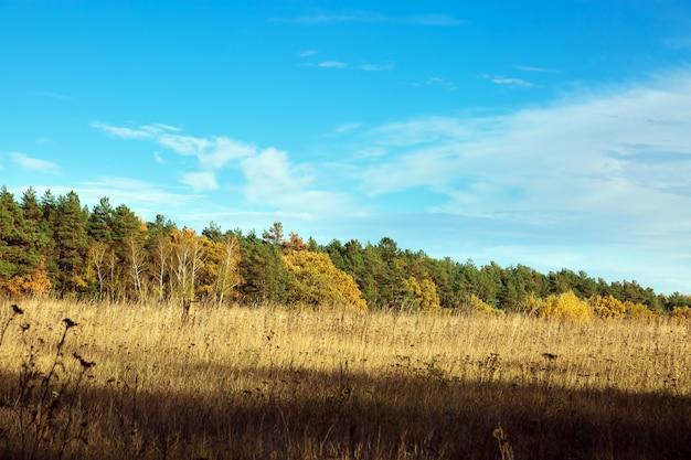 가을 혼합 숲의 가장자리입니다. 필드로 이동합니다. 푸른 하늘에 대하여 풍경입니다. 배경