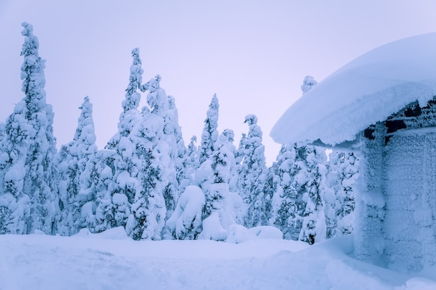 The edge of the winter spruce forest. the roof and all around are filled with lots of snow