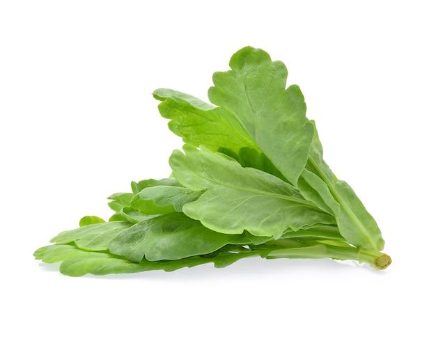 식용 국화 잎 흰색 절연