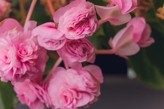 食用花とマイクログリーンベゴニア