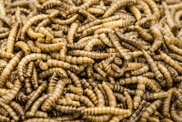Edible mealworms isolated high quality