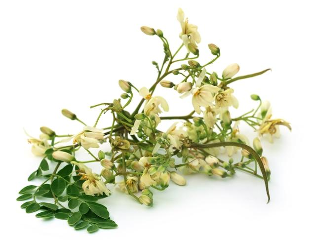 白い背景の上に緑の葉を持つ食用モリンガの花