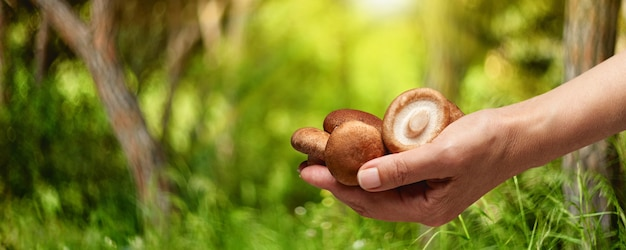 Edible mushroom in hand on the background of the forest, summer season