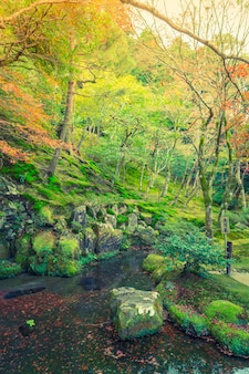 川と秋の森(フィルタリングされた画像は、ヴィンテージeffeを処理し