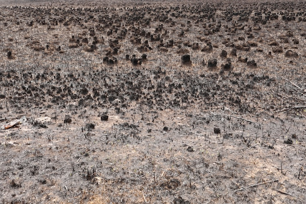 Effects of grass fire on soils. charred grass after a spring fire. black surface of the rural field with a burned grass. consequences of arson and stubble burning. aftermath of natural disasters.