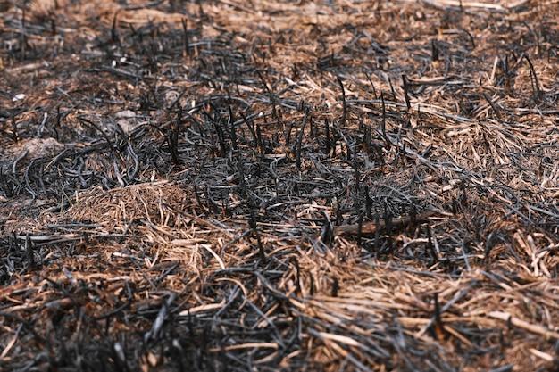 Влияние травяного пожара на почву. обгоревшая трава после весеннего пожара. черная поверхность сельского поля с сгоревшей травой. последствия поджога и сжигания стерни. последствия стихийных бедствий.