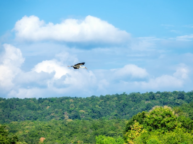 空を飛んでいる白eg。
