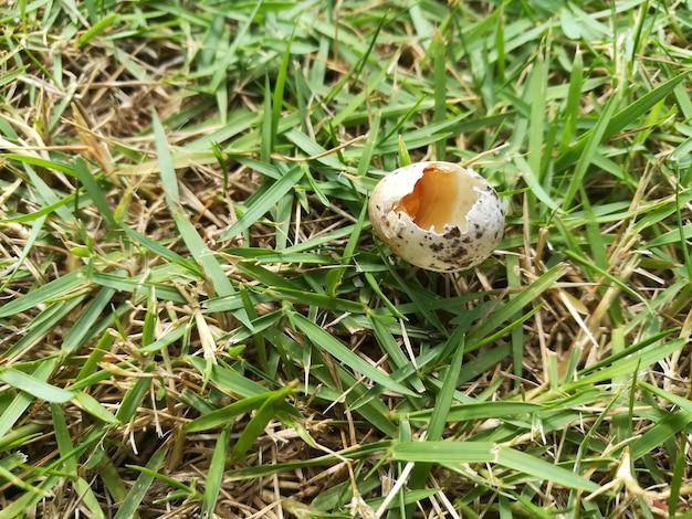 Egg broken on grass close up