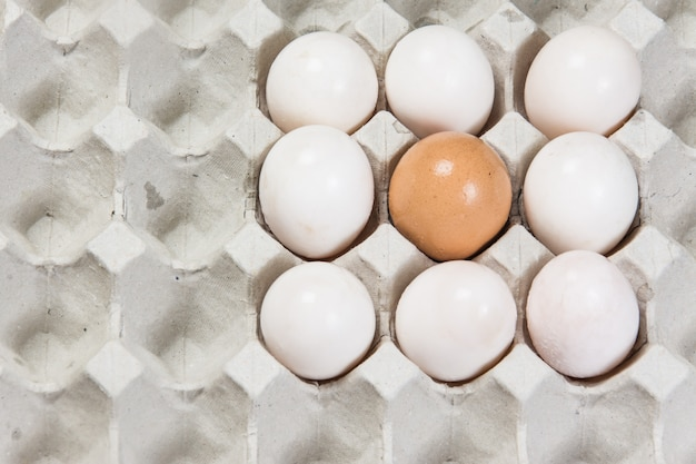 Egg in an egg crate on white background