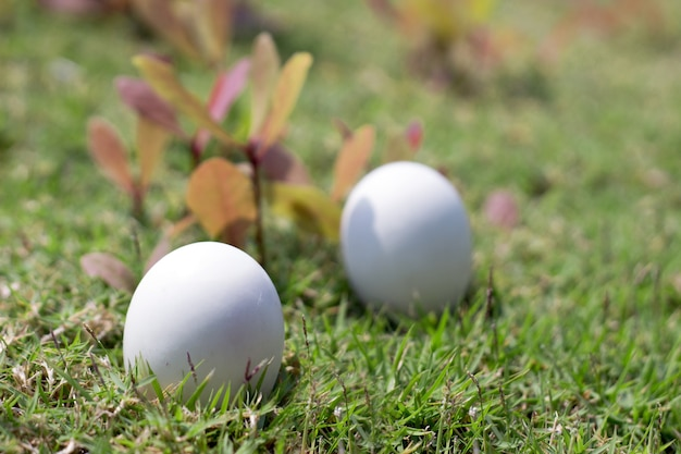 Egg on grass of easter concept