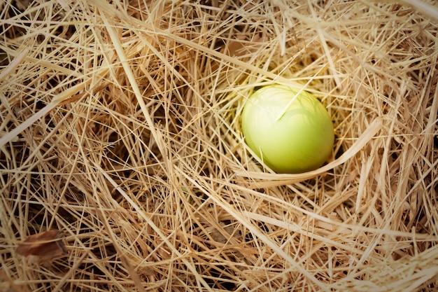 Яйцо в природе