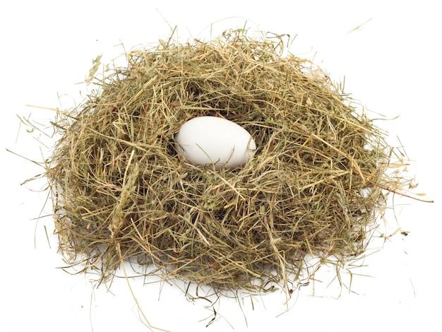 Яйцо в гнезде, изолированном на белой поверхности