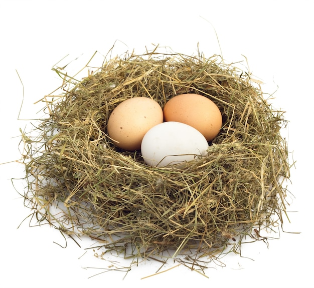 Egg in nest isolated