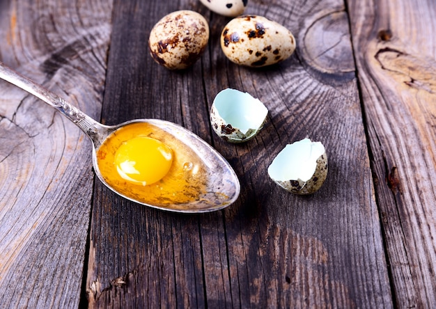 Egg quail with yolk in an iron spoon on a gray wooden surface surface surface