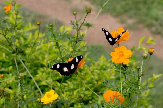 緑に囲まれた花の上に座っている卵蝶