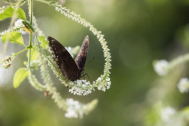 自然の背景と花の卵の蝶