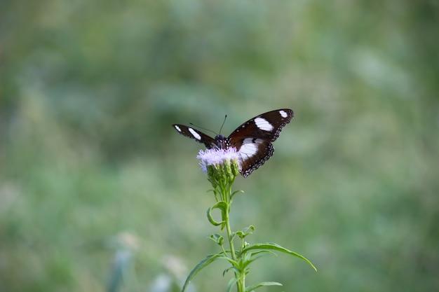 花の植物の卵蝶