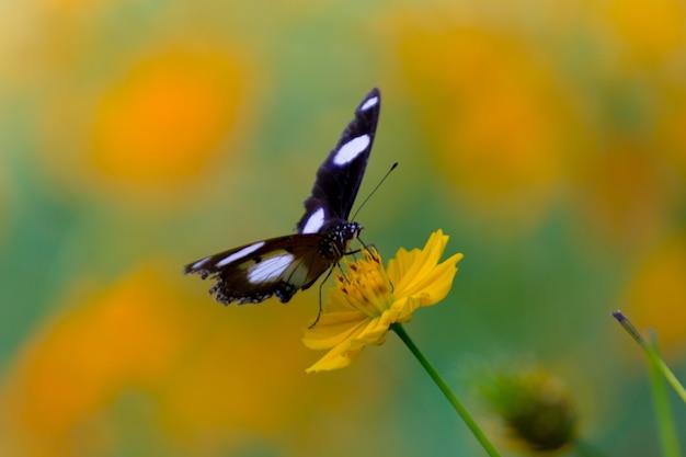 春の間に花の植物の上にホバリングして休むエッグフライバタフライr Premium写真