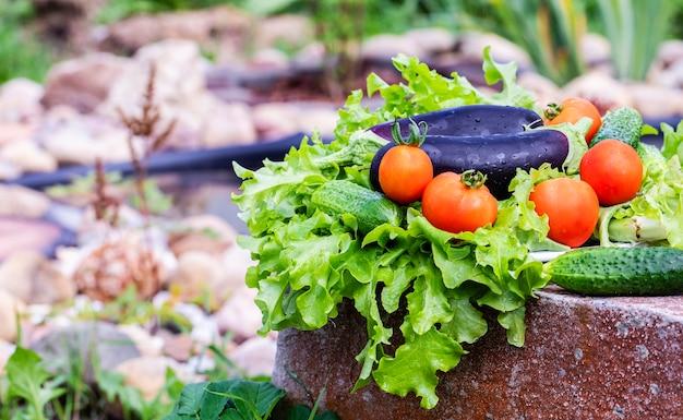 Eggplant, tomatoes and cucumbers on lettuce leaves. harvest of vegetables.