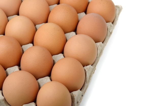 Eggs in the egg panel on white background