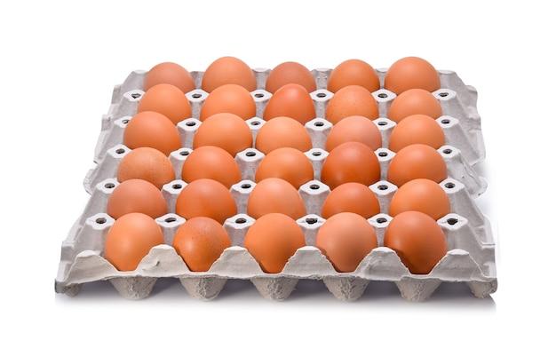 흰색 배경에 계란 판지에있는 계란.