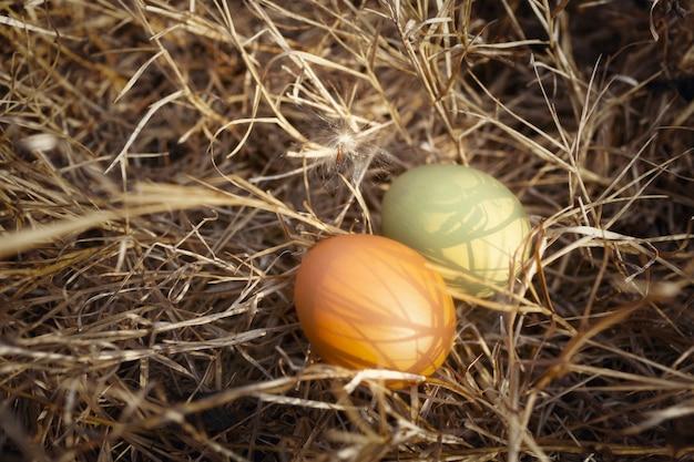 Яйца в природе