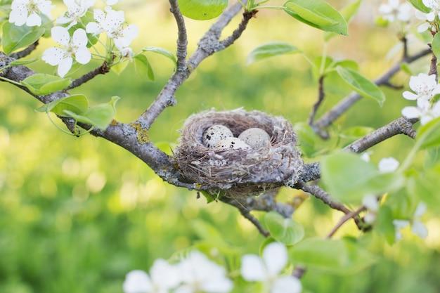 屋外の巣の卵