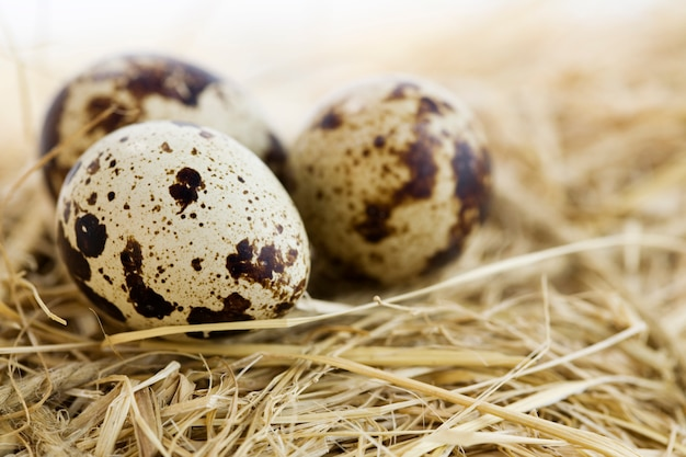 Eggs laying on hay