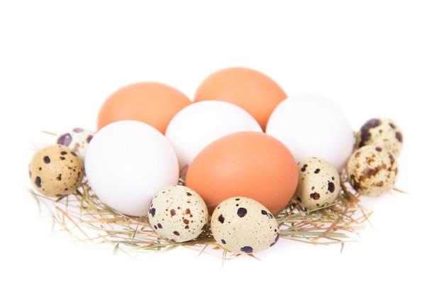 卵は白い背景の上の巣にあります