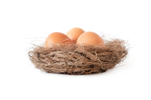 Eggs in a nest on a white surface