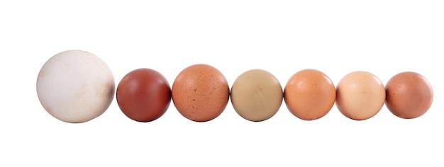 Яйца разных размеров и цветов на белом фоне