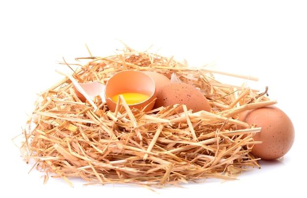 흰색 바탕에 계란