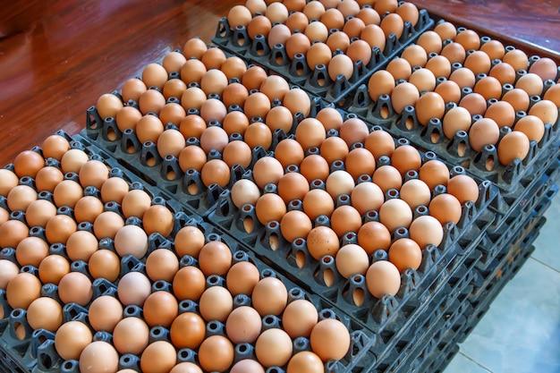 Панель яиц