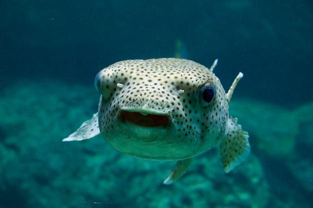 水族館のエゴイスティックな魚、魚のクローズアップの肖像画。海の動物の生活。