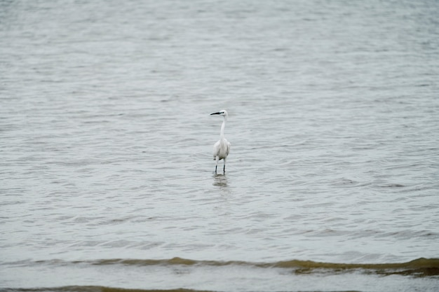 Egret stand on sea