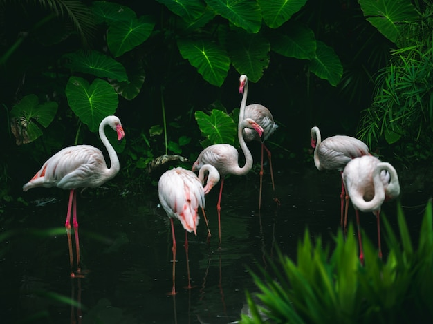 Egrets in deep forest